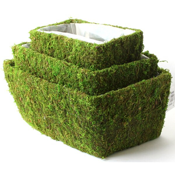 Real Moss Planter Box Set (Set of 6) by SuperMoss™