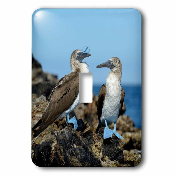 Ecuador Galapagos Islands Isabela Island Footed Booby Socket Plate