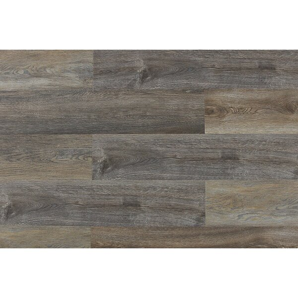 Aditya  8 x 71 x 12mm Laminate Flooring in Belluno by Serradon