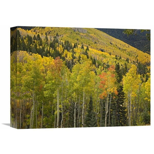 Nature Photographs Aspen Trees in Autumn, Santa Fe National Forest Near Santa Fe, New Mexico Photographic Print on Wrapped Canvas by Global Gallery