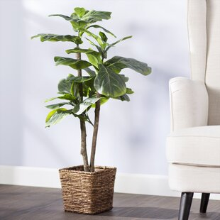 Mini Tree In Basket By Beachcrest Home