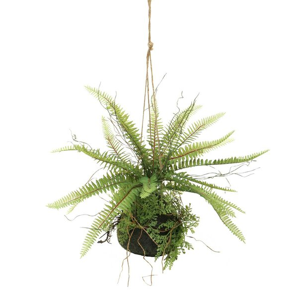 Artificial Sword Fern Hanging Foliage Plant by Ophelia & Co.