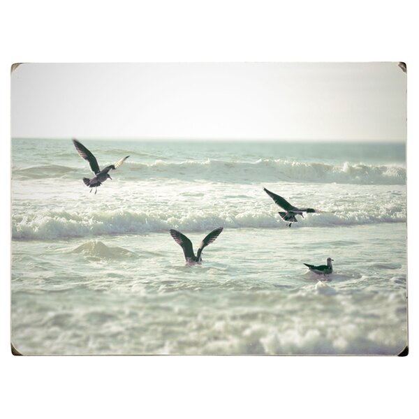 Playing Seagulls Photographic Print on Wood by Artehouse LLC