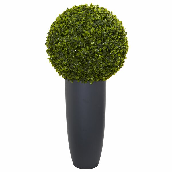30 Boxwood Topiary in Cylinder Planter by Greyleigh