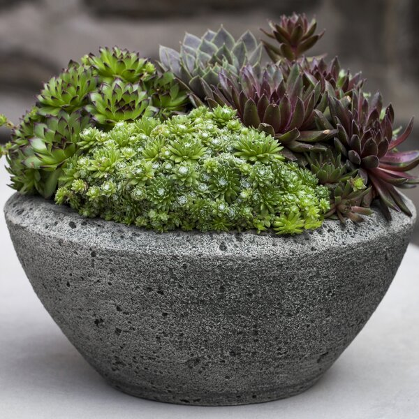 Cherly Bowl Cast Stone Pot Planter by Williston Forge
