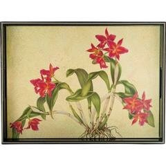 Huber Cattleya Orchid Serving Tray by Charlton Home