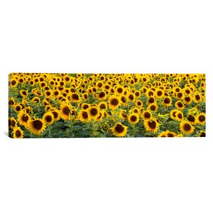 Panoramic Sunflowers (Helianthus annuus) in a Field, Bouches-Du-Rhone, Provence, France Photographic Print on Wrapped... by iCanvas