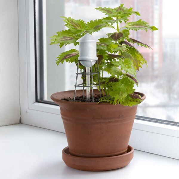 City Water Glass Pot Planter by Fred