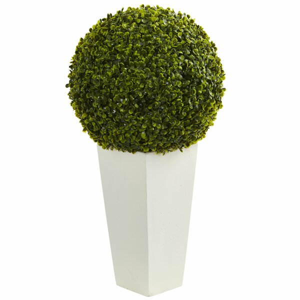 Boxwood Topiary in Tower by Darby Home Co
