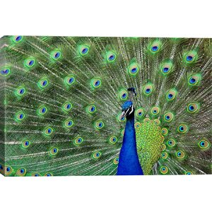 'Peacock Feathers' Photographic Print by East Urban Home