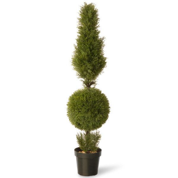 Juniper Cone Ball Round Topiary in Pot by National Tree Co.