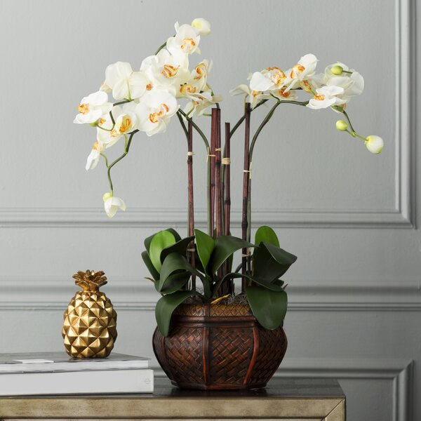 Orchids Floral Arrangement in Decorative Vase by Willa Arlo Interiors