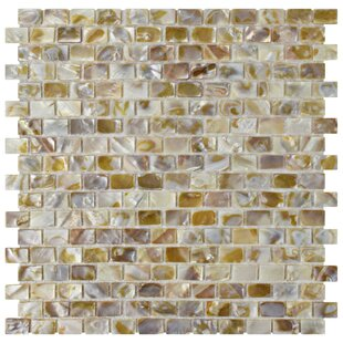 S 1 X Seashell Mosaic Tile In Textured Natural Shell