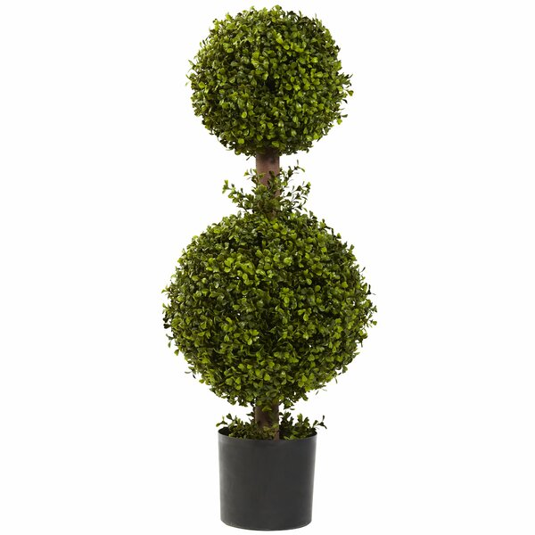 Double Boxwood Topiary in Planter by Darby Home Co
