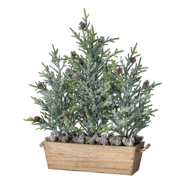 20 Frost Triple Tree Mini Fir in Planter by The Holiday Aisle
