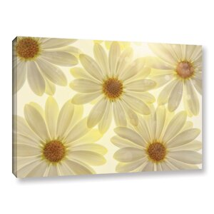 White Daisies Graphic Art on Wrapped Canvas by August Grove