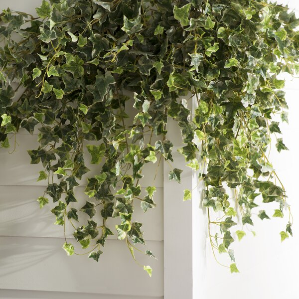 Artificial Variegated Mini Hanging Bush Ivy Plant by Charlton Home