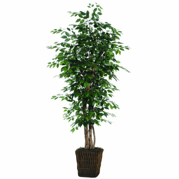 Ficus Executive Tree in Basket by The Holiday Aisle