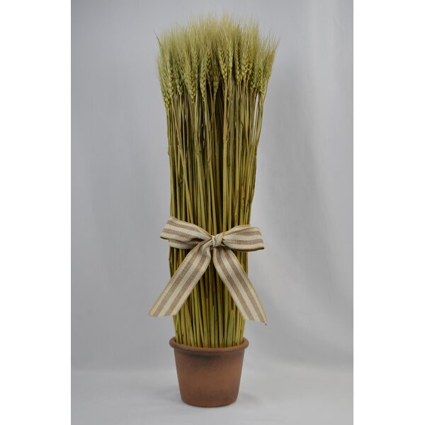 Natural Bundle Wheat Grass in Pot by August Grove
