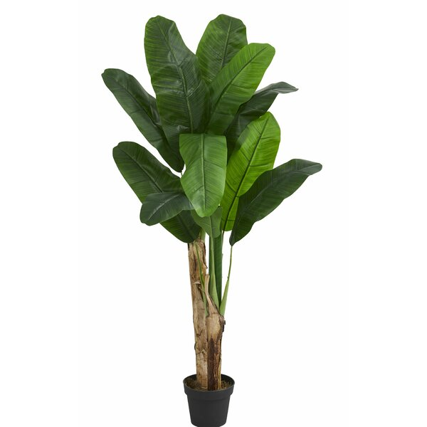 Double Stalk Banana Leaf Tree in Planter by Bay Isle Home