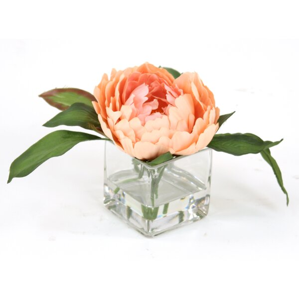 Waterlook Peach Peony in Square Glass Floral Arrangements (Set of 3) by Distinctive Designs