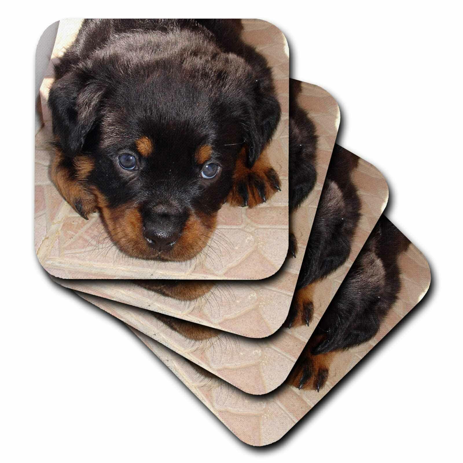 3drose Ceramic Tile Coasters Dog Rottweiler Puppy Set Of 4 Cst 17676 3 Wayfair