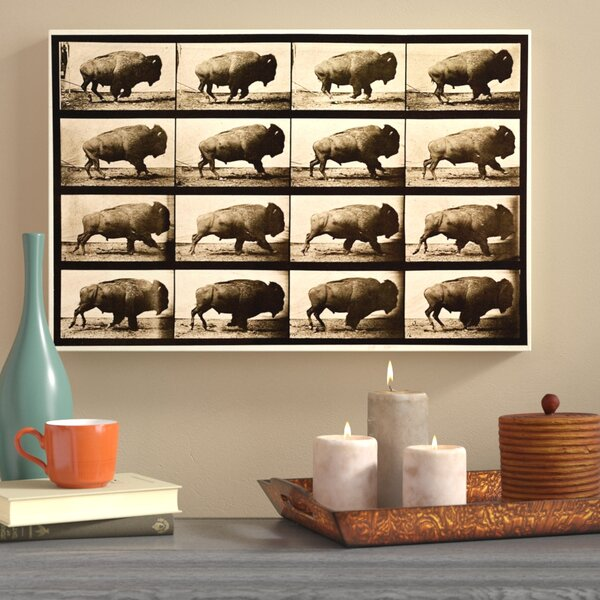 Buffalo in Motion Photographic Print on Wrapped Canvas by World Menagerie