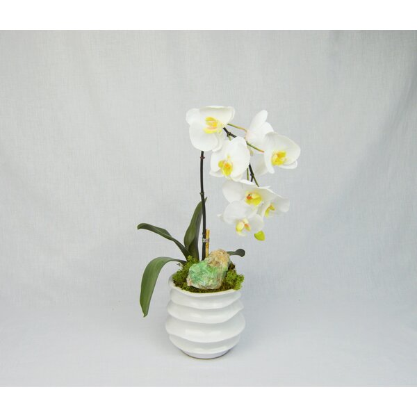 Orchid in Container with Calcite by Greyleigh