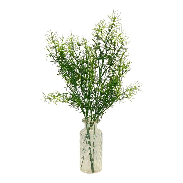 Asparagus Maple Plant in Decorative Vase by August Grove