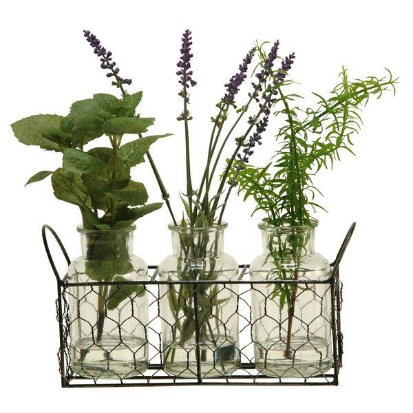 Mint/Springeri/Lavender Plant by Gracie Oaks