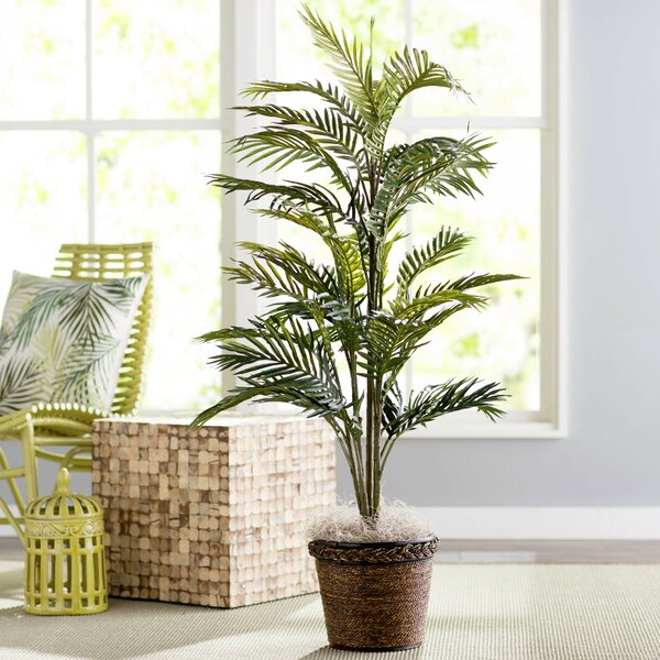 Bermudiana Palm Tree in Basket by Beachcrest Home