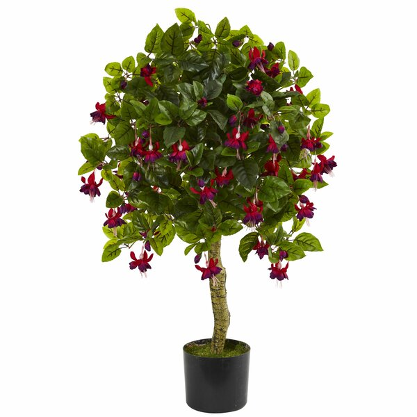 Fuchsia Ficus Topiary by Red Barrel Studio