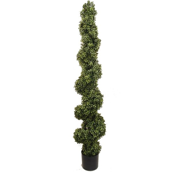 Spiral Boxwood Topiary in Pot by Larksilk