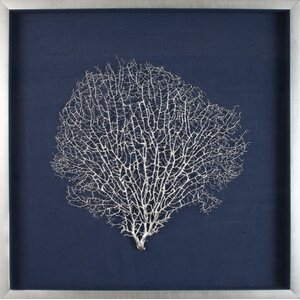 Large Sea Fan Framed Graphic Art by Mirror Image Home