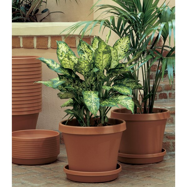 Felker Resin Pot Planter by Charlton Home