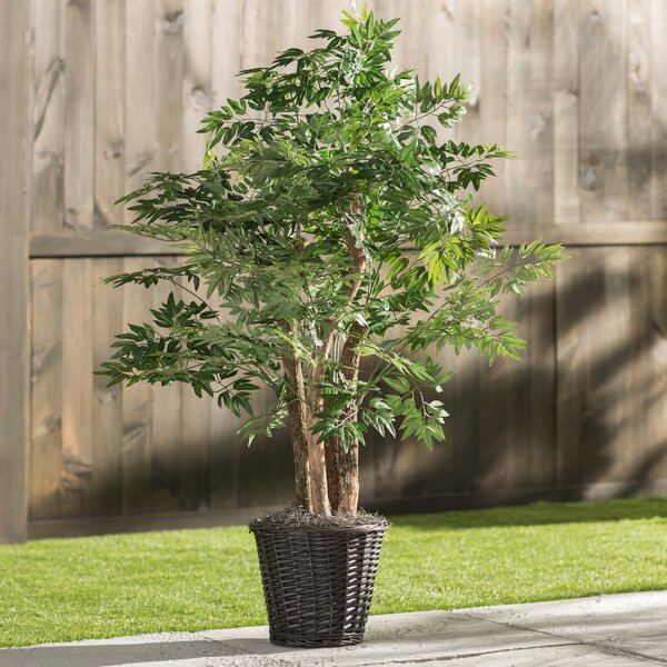 Artificial Potted Natural Ming Aralia Tree in Basket by Three Posts