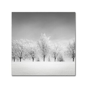 Ice Storm by Dave MacVicar Photographic Print on Wrapped Canvas by Trademark Fine Art