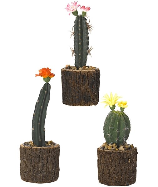 3 Piece Assorted Mini Cactus Floor Plant in Planter Set by Millwood Pines