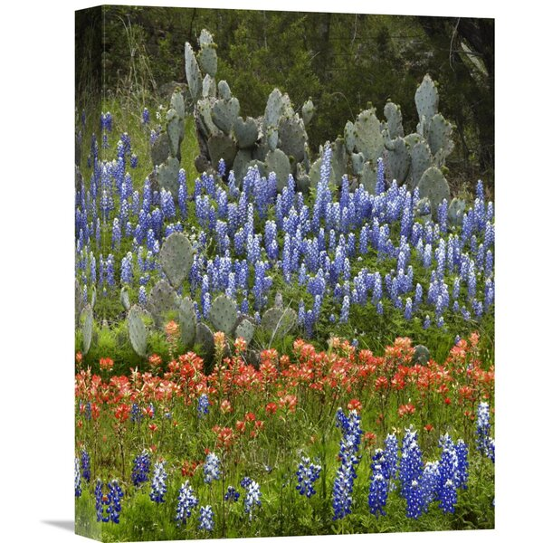 Nature Photographs Bluebonnet and Pricky Pear Cactus, Texas by Tim Fitzharris Photographic Print on Canvas by Global Gallery