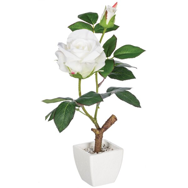 Roses Plant in Pot by House of Hampton