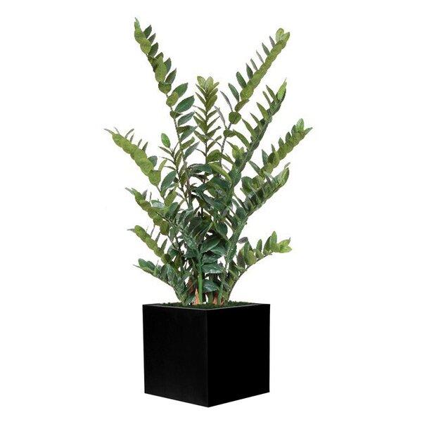 Zamia Foliage Plant in Planter by Bayou Breeze