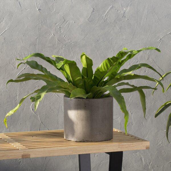 Mateo Composite Pot Planter by My Spirit Garden