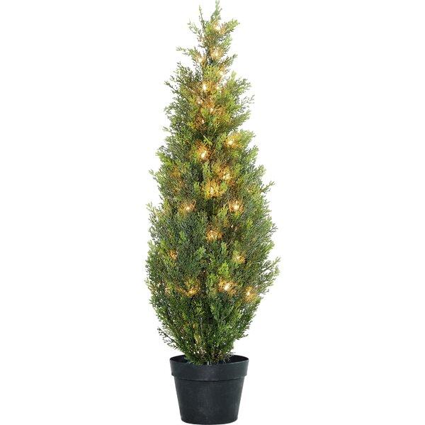 Floor Cedar Tree in Pot by Laurel Foundry Modern F
