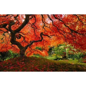 'Japanese Maple' Framed Photographic Print on Wrapped Canvas by Bloomsbury Market