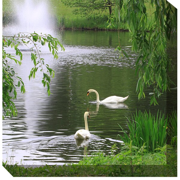 Swans Framed Photographic Print on Wrapped Canvas by West of the Wind Outdoor Canvas Art