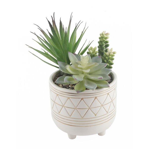 Garden Geo Succulent Plant in Pot Set by Bungalow Rose