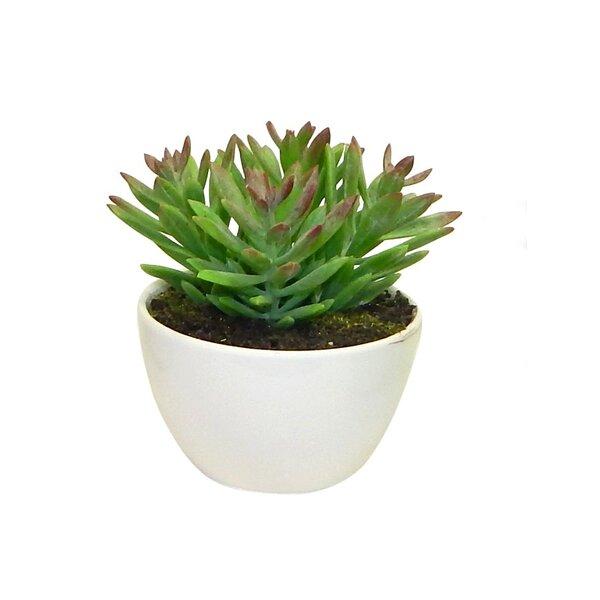 Minimalist Arrangement Desktop Succulent Plant in Planter by Wrought Studio