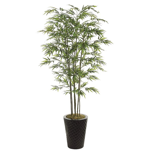 Floor Bamboo Tree in Decorative Vase by Gracie Oaks