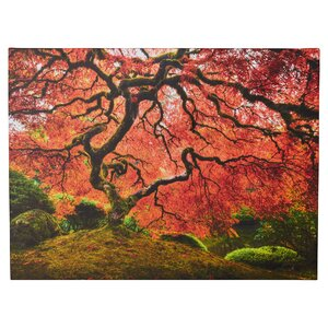 'Japanese Tree' Photographic Print on Wrapped Canvas by World Menagerie