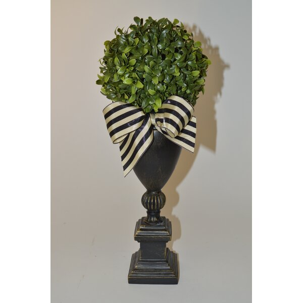 Boxwood Topiary in Urn by The French Bee